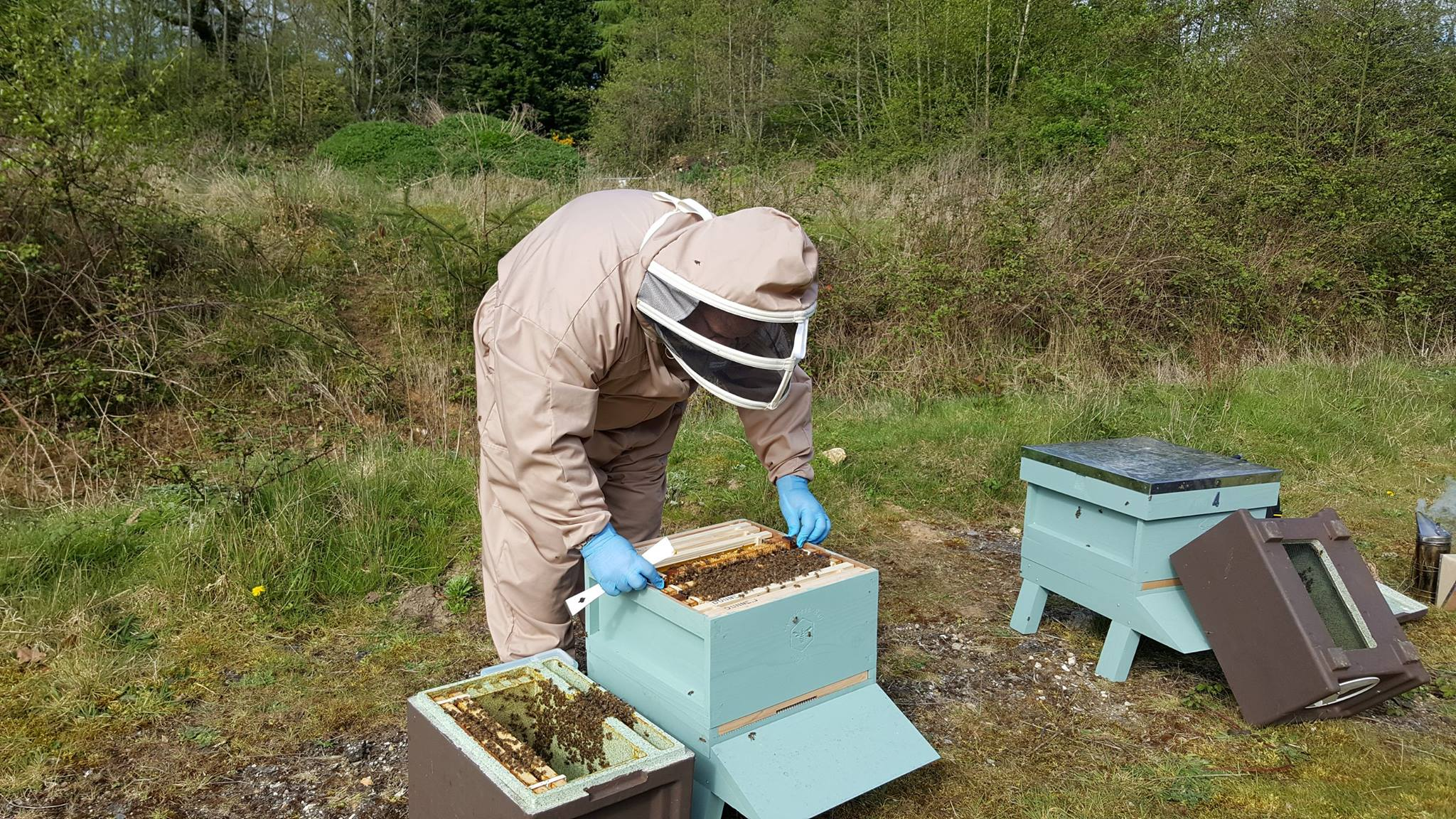 Setting up new hives
